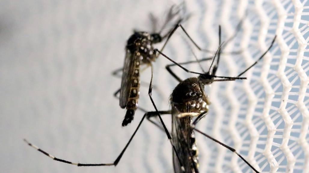 dengue (Agência Brasil)