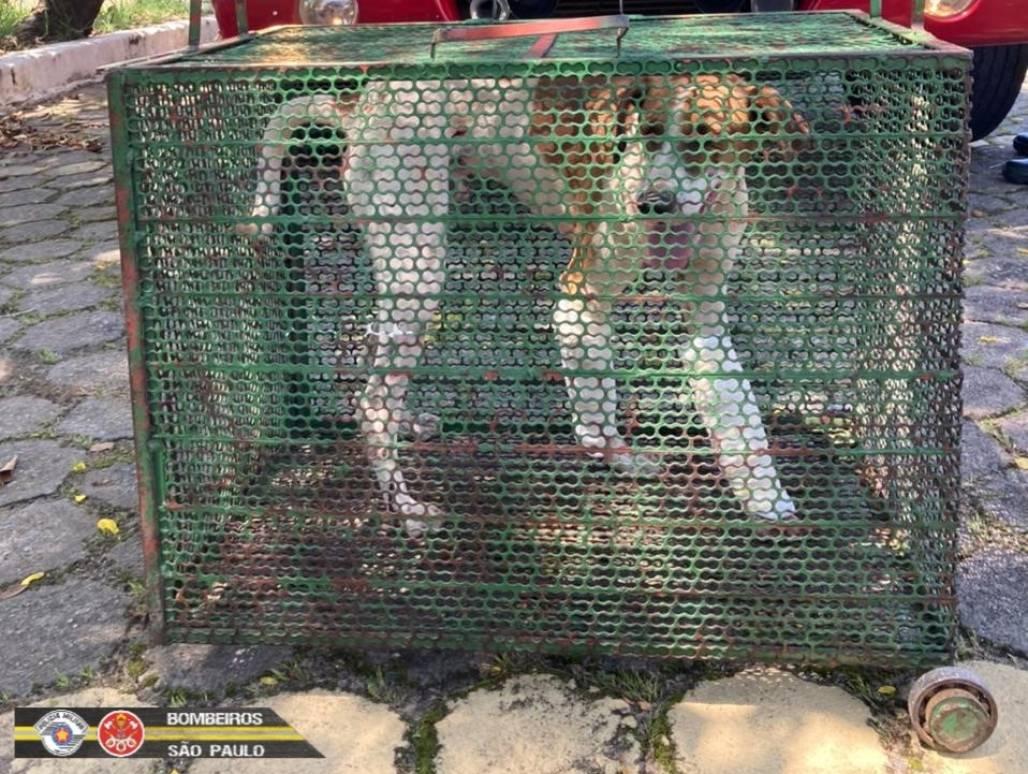 cachorro resgatado Taubaté 4 (Foto: Divulgação/ Corpo de Bombeiros)