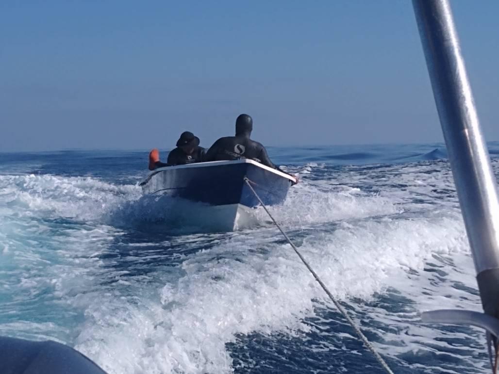 Perseguição no mar - Foto de ICMBio Alcatrazes (Foto / ICMBio Alcatrazes)