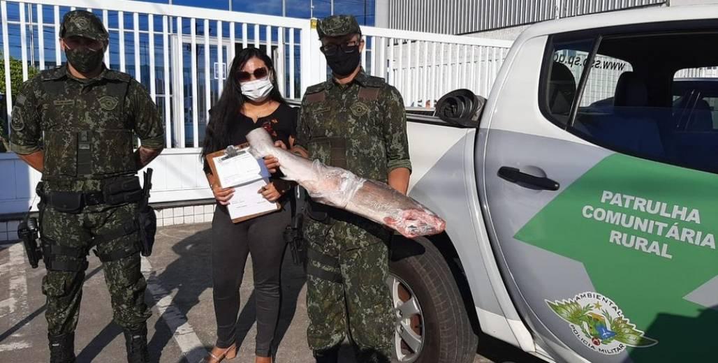 apreensão tubarão em freezer (Foto: Divulgação/Polícia Ambiental)