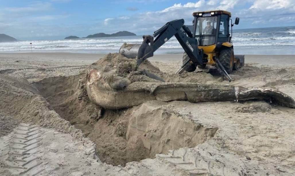 baleia morta em ssbá  (Foto: Divulgação/PMSS)