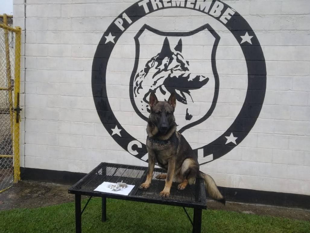 32 porções de maconha foram encontradas por cães farejadores em área de mata de presídio em Tremembé (Foto: Divulgação/SAP)
