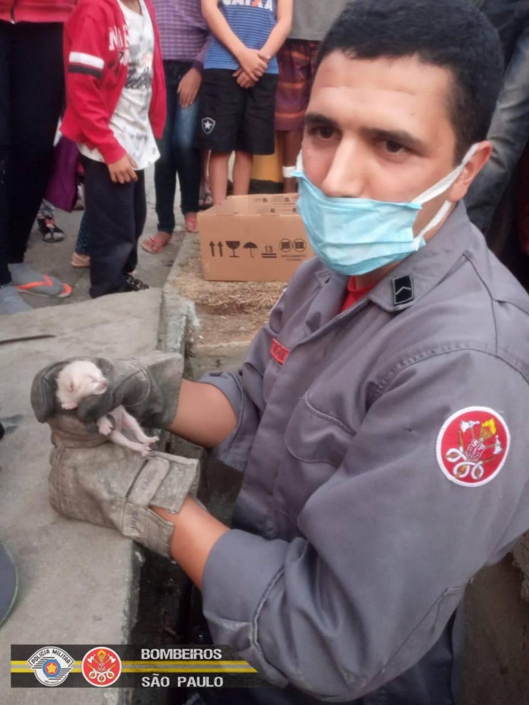 Gato resgatado em Pinda (Corpo de Bombeiros SP)