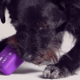 Nudog: Nubank lança brinquedo para cachorros