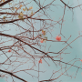 Poesia: Fleurs d'enfance